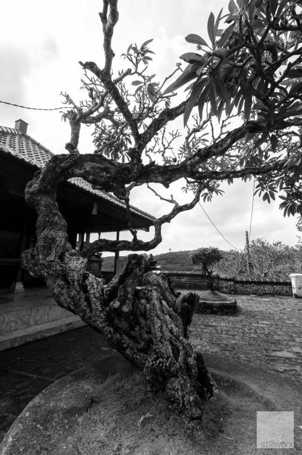 Bali09